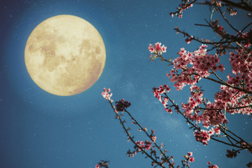 Wall Mural - Romantic night scene - Beautiful cherry blossom (sakura flowers) in night skies with full moon.  - Retro style artwork with vintage color tone.