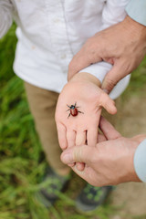 Boy holds a bug in his palm hand with Father's hands