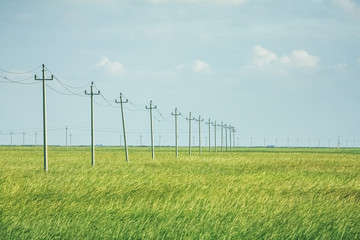 Electricity poles and power lines in wheat field against sky,China.