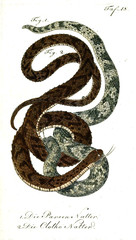 Illustration of a snake.