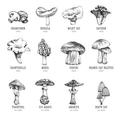 Forest types of mushrooms collection, edible and non-edible boletus in retro sketch vector style. All elements isolated.