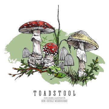 Very dangerous non-edible poisonous forest mushrooms colorful sketch vector illustration isolated.