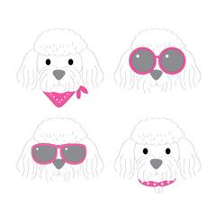 Cartoon cute fashion white poodle dog vector.