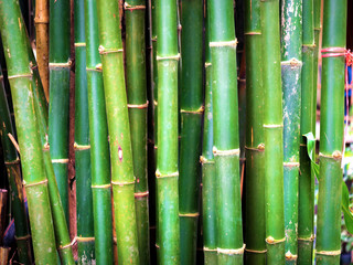 Bamboo with a natural background 03