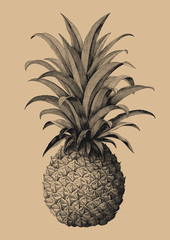 Pineapple hand drawing vintage engraving style
