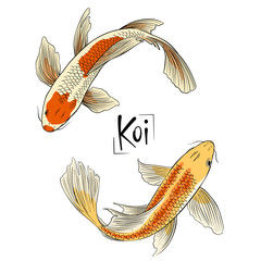 Hand drawn vector couple of koi fish isolated