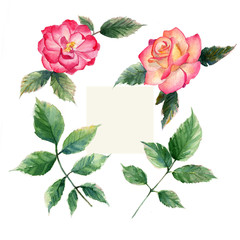 rose watercolor elements