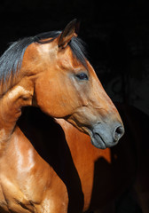 Brown sports horse with bridle, close-up