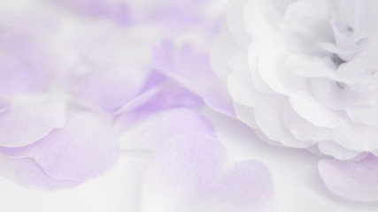 Close up of a rose flower in a vintage style and soft focus.