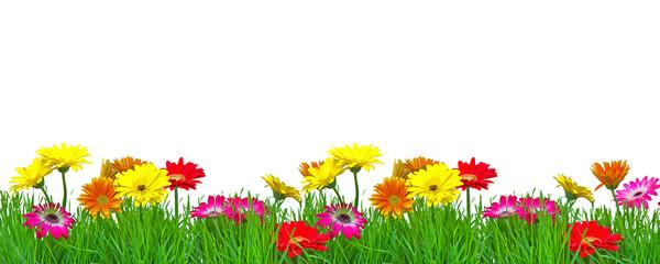 Frühjahr Blumenranke Freisteller