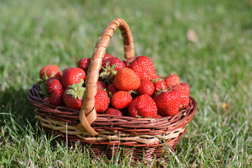 on the grass Wicker basket with strawberries