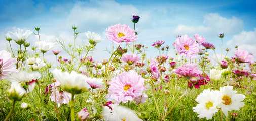 Pretty spring banner with pink and white flowers