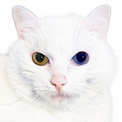 cat with minnow eyes