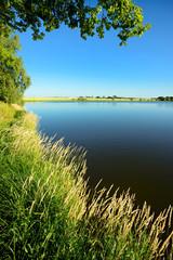 Stiller See im Sommer, Gräser am Ufer