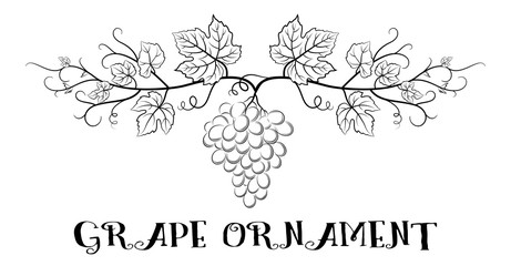 Floral Ornament, Bunch of Grapes with Leaves and Berries Black Contour Pictograms Isolated on White Background. Vector