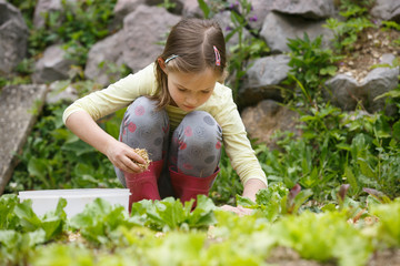 Little girl holding a handful of straw mulch and protecting garden bed against drought. Natural childhood concept, outdoor living, simple life concept.