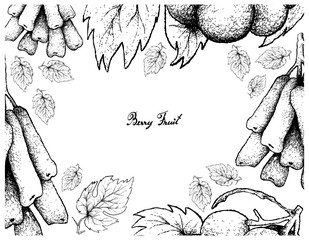 Hand Drawing Frame of Moon Drops and Pione Grapes