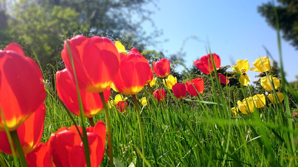 Endlich Frühling! – Blumenwiese