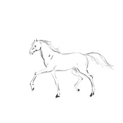 Painted horse silhouette on a white background. Graceful equine riding.