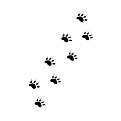 Animal paw prints. Traces of the beast on a white background isolated.
