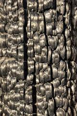 Sunlit burnt charred wood texture