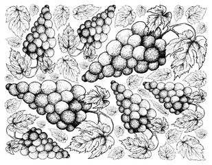 Hand Drawing Background of Fresh Juicy Red Grapes