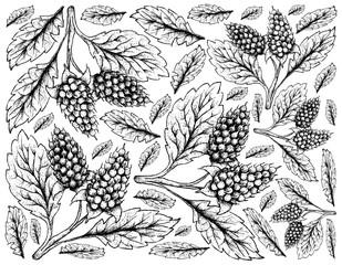 Hand Drawn Background of Amora Verde Berries