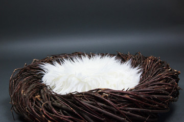 Bird Nest Fantasy Background Photo Prop Isolated on gray