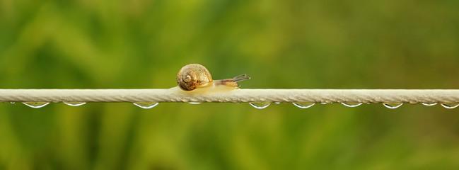 Langer Weg Schnecke auf einer Wäscheleine mit Wassertropfen - Long way snail on a clothesline with water drops