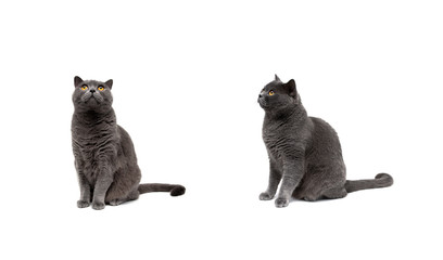 cat with yellow eyes isolated on a white background