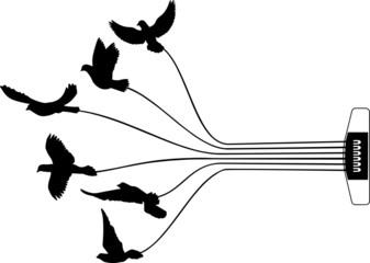 Tauben mit Gitarren-saite