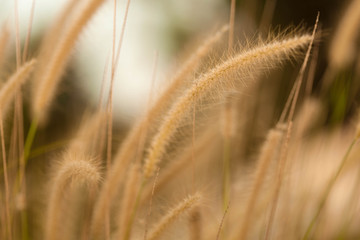 Out of focus image, blur and closeup grass flower