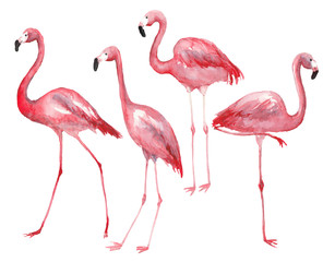 Watercolor pink flamingo set