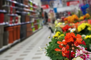 flower and garden department in a supermarket