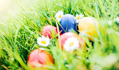 Colorful Easter eggs in a grass