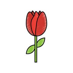 tulip flower spring icon image vector illustration design  sketch style