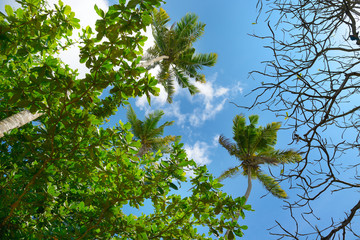 Palm tree against beautiful blue sky