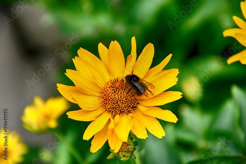 Dark yellow flowers growing on a green meadow and a butterfly on dark yellow flowers growing on a green meadow and a butterfly on them mightylinksfo