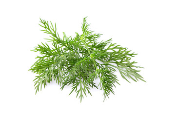 Fresh dill isolated close-up.