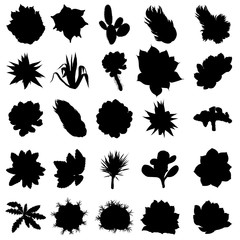Large Black silhouettes Wild cactus set. Hand drawn prickly cacti. Terrarium cactus collection. Wild floral exotic tropical. Vector.