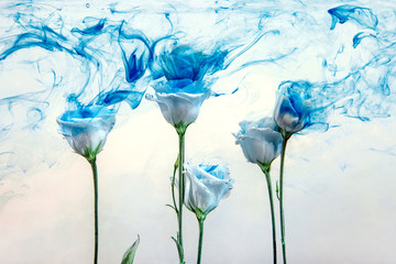 flower water blue background white inside under paints acrylic rose smoke streaks
