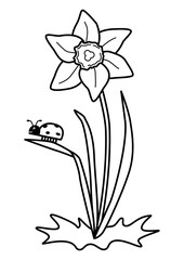 Search Photos Daffodil