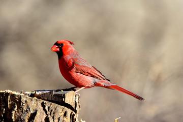 One Red Bird
