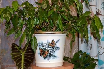 Комнатное растение в горшке с рисунком бабочек