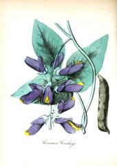 Zelfklevend Fotobehang Abstract bloemen Illustration of flower