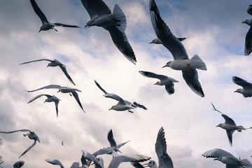 Seagulls on Lake Chiemsee. Bavaria. Germany