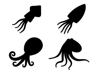 Squid, octopus and cuttlefish in icons and symbol