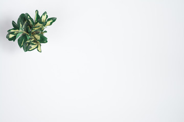 White simple background with yellow-green leaves