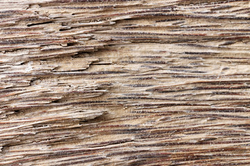 Old dead coconut palm (Cocos nucifera L.) trunk with expressed central cylinder texture on the Indian Ocean coast