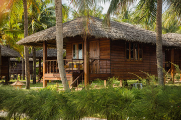 hut in a palm grove